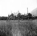 """Kozuc"" (kozolec), Svino 1951.jpg"