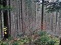"""""""Wanderweg"""" im Eschachtal - panoramio (1).jpg"""