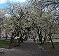 (((پارک ملت مراغه در بهار ))) - panoramio.jpg