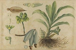 (Folhas, frutos e raízes)