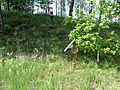 Švenčionių sen., Lithuania - panoramio (28).jpg
