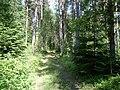 В лесу - panoramio - alinco fan.jpg
