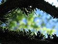 Гора Воронья, мох на дереве.jpg
