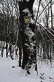 Дуби Рильського DSC 0130.jpg