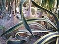 Кактусятник Никитского ботанического сада. - panoramio.jpg