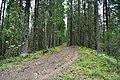 Лесная дорога в национальном парке.jpg
