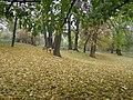 Немирчанський 5.jpg