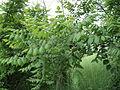 Парк шума Гази Баба во мај (176).JPG