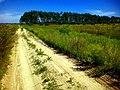 По дорозі до Північного кладовища - panoramio.jpg