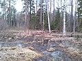 Сплав - panoramio (13).jpg