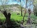 الطبيعة في البرية الجزائرية (سطيف).jpg