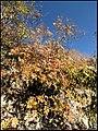 زیباییهای دره آشان - panoramio (4).jpg