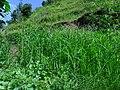 कलालपसे - panoramio (6).jpg