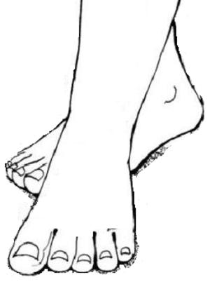 Prabhupāda - Prabhupāda - lotus feet of Mahaprabhu