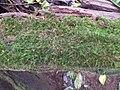 อุทยานแห่งชาติ แม่วงก์ - panoramio (1).jpg