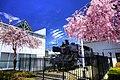 会津田島駅の蒸気機関車C11と桜.jpg