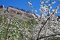 広橋梅林 Hirohashi-bairin 2014.3.22 - panoramio.jpg