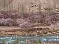 库祖村 - Kuzu Village - 2015.04 - panoramio.jpg