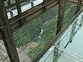 观景台俯看七折瀑 - Look Down at the Seven-bend Cascade from Skywalk - 2010.04 - panoramio.jpg