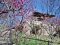 錦織公園にて 梅の里 2013.3.15 - panoramio (3).jpg