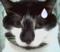 黑白猫.png