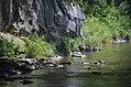 02017 0973 Oslawa, Fluss-Felsen.jpg