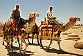 035 Camells a la Via de les Columnes (Palmira).jpg