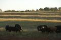 071001 NRCS Geary 339 - Oklahoma (717006)(NRCS Photo Gallery).tif