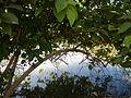 07976jfPampanga River banks Candelaria Boats Fish Delta Bulacan Roadsfvf 15.JPG
