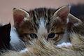 1-month-old kittens 18.jpg