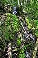 170818-3 nahe der Quelle - Autaler Wasserfall.jpg
