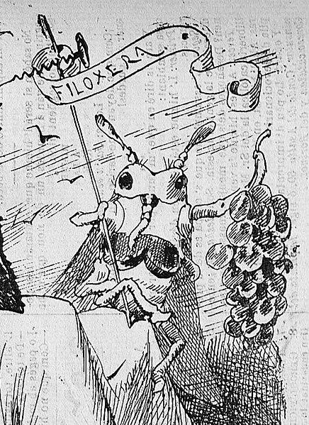 File:1879-07-27, La Campana de Gracia, La situació d'Espanya (cropped), filoxera.jpg