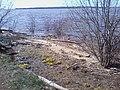 18 Мая. Первые цветы - panoramio.jpg