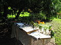1 Zámek Veltrusy, kuchyňská zahrada.jpg