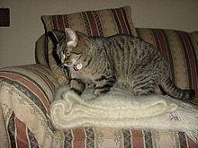 Cat Kneading Dog Gif