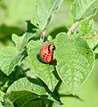 2006-07-16 larve3.jpg