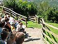 2008 07 15 Bird Care Centre of Castel Tyrol 60770 D9773.jpg