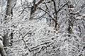 2011 snow february3 (5430268813).jpg