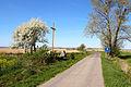 2012-04 Gadzowice - Rusín 1.jpg