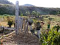 2013-01-05 Wood stûpa Graves in Ogo,Kobe,Hyogo prefecture 神戸市北区淡河町の墓地と木製卒塔婆 DSCF4041.JPG