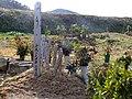 2013-01-05 Wood stûpa Graves in Ogo,Kobe,Hyogo prefecture 神戸市北区淡河町の墓地と木製卒塔婆 DSCF4041.JPG