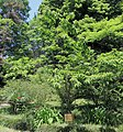 2014 Suchum, Ogród botaniczny (18).jpg