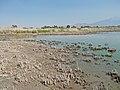 2015.08.22 11.10.25 DSCN2865 - Flickr - andrey zharkikh.jpg