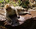2016-04-21 14-51-48 montagne-des-singes.jpg