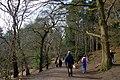 25.3.16 Delamere Forest 17 (25761539960).jpg