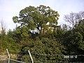 3 Chome Uenonishi, Toyonaka-shi, Ōsaka-fu 560-0011, Japan - panoramio - yokoyokoi (1).jpg