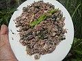 4087Ants Common houseflies foods delicacies of Bulacan 25.jpg