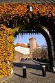 7394vik Wawel. Foto Barbara Maliszewska.jpg
