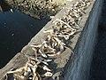 9768Dilis Pancit Lug-Log Foods Navotas City 25.jpg