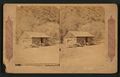 A bee keeper's home in California, from Robert N. Dennis collection of stereoscopic views.png